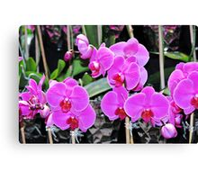 Pink Pink Orchids Canvas Print