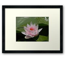 Water Lily With Sprinkles Framed Print