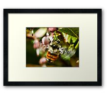 The World of Bees Framed Print