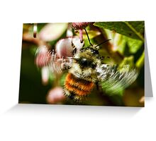 The World of Bees Greeting Card