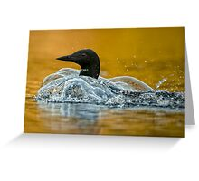 Bubbling Loon Greeting Card