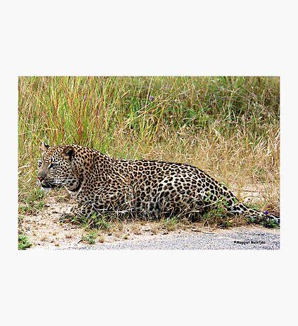 AMAZING BLENDING - THE LEOPARD - Panthera pardus Photographic Print