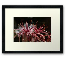 Flower Limbs Framed Print