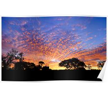 Texas Hill Country Morning Poster