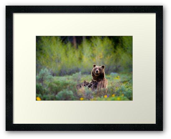Grizzly Bear #399 Nursing by cavaroc