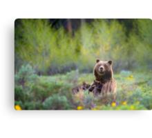 Grizzly Bear #399 Nursing Metal Print