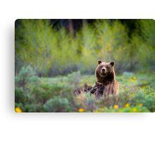 Grizzly Bear #399 Nursing Canvas Print