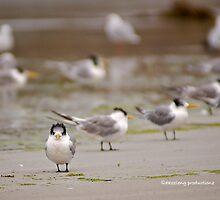 Beach Bird by dazzleng
