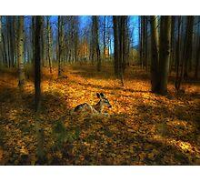 4013 Photographic Print