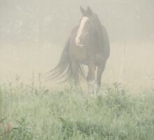 20.7.2011: Morning Mist Moment by Petri Volanen