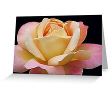 Gracious Rose Greeting Card