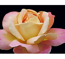 Gracious Rose Photographic Print