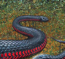 Red Bellied Black Snake by SnakeArtist
