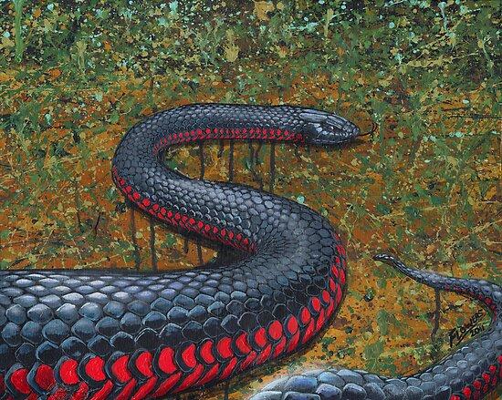 Red Bellied Black Snake by SnakeArtist