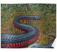 Red Bellied Black Snake Poster