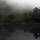 Fog in Doubtfull Sound by EblePhilippe