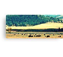 Yellowstone Buffalo Canvas Print