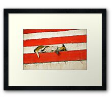 Sleeping dog Framed Print