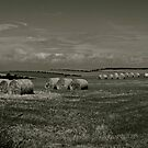 The Hay Is Ready by Lou Wilson