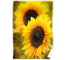 Textured Sunflower Poster