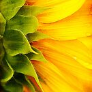 Sunflower Detail by Beth Mason