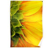 Sunflower Detail Poster