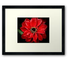 Crimson red Framed Print