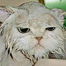 Bathing Beauty Princess Kendra - Why I Has To Have Baths.... by Toni Kane