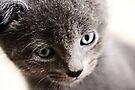 Kitten V by Anne Staub