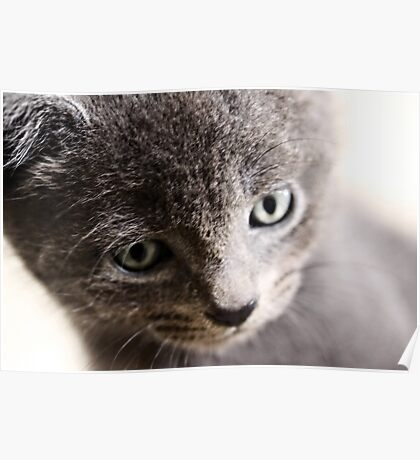 Kitten V Poster