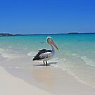 My friend at Rottnest Island. by Annbjørg  Næss