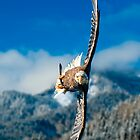 Crosswind by Delfino