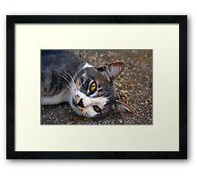 CAT PORTRAIT CLOSE UP Framed Print