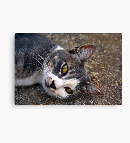 CAT PORTRAIT CLOSE UP Canvas Print