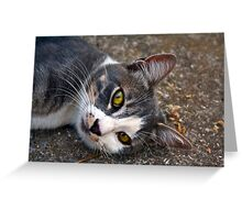 CAT PORTRAIT CLOSE UP Greeting Card