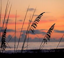 Sea Oats Sunset by Philip  Brown