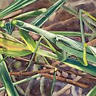 """Peering Praying Mantis"" - Hiding in the grass by Rainelle  Meridith"