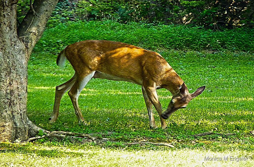 A Deer Visit by Monica Engeler