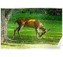 A Deer Visit Poster