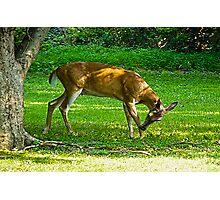 A Deer Visit Photographic Print
