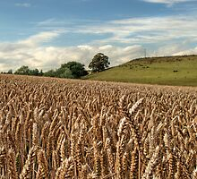 Rural England by cameraimagery