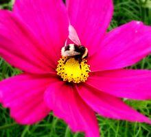 Buzzing around, in the garden!  by shelleybabe2