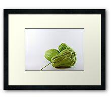 Three green chokos Framed Print