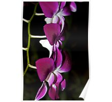 Triplet Orchids Poster