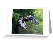 VULTURE IN FLIGHT Greeting Card