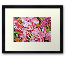 Truth's Beauty Orchids Framed Print