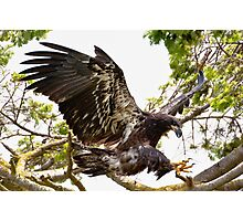 Baby Eagle Flying School Advanced Lesson Photographic Print