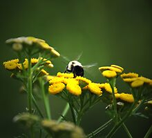 Buzz- Buzz -Buzz Said The Bumble Bee by jules572