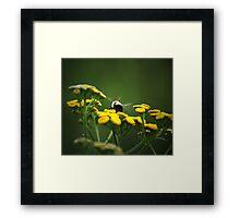 Buzz- Buzz -Buzz Said The Bumble Bee Framed Print