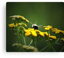 Buzz- Buzz -Buzz Said The Bumble Bee Canvas Print